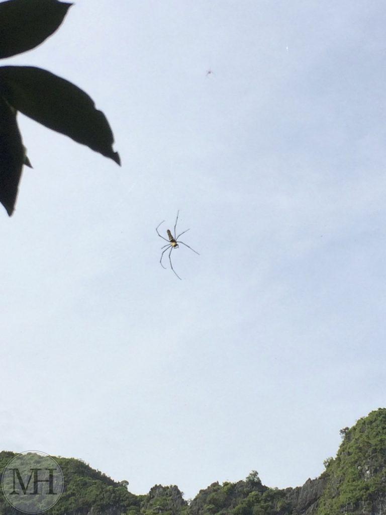 Halong Bay edderkop Vietnam