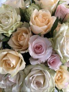 roser mesthverdag